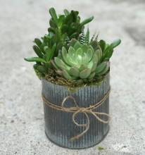 Signature Succulents