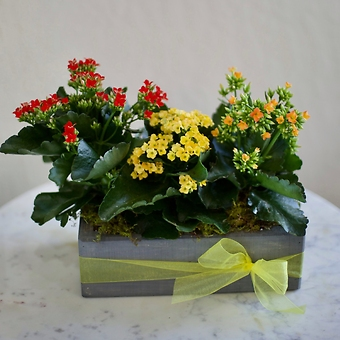 Blooming Kalanchoe Planter